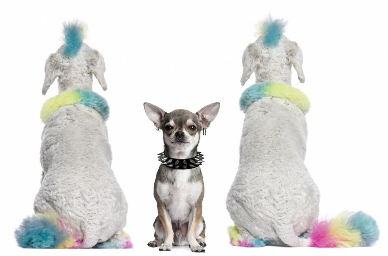 dogs dressed as punks