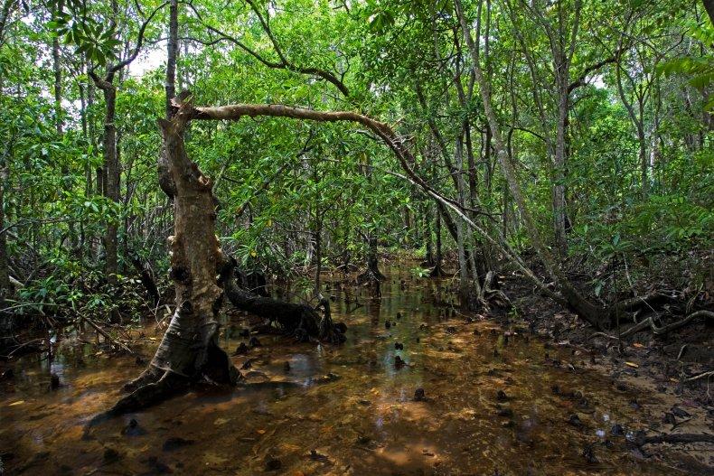 Emmanual Cortez found in Daintree Rainforest