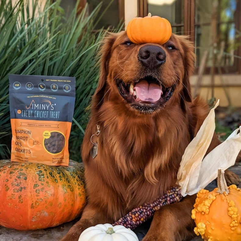 best dog training treats jiminys