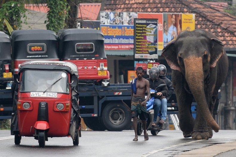Man walks next to elephant