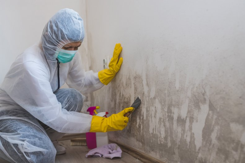 Stock image of a cleaner removing mold