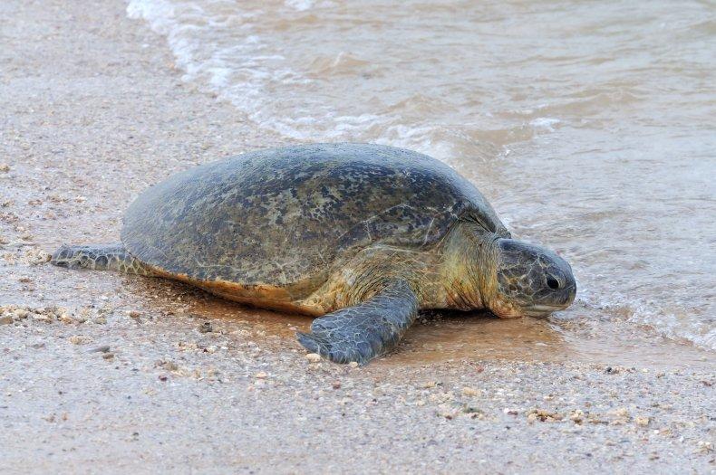 Sea Turtle Whales Pollution WWF Sri Lanka