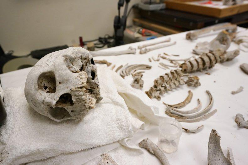 Remains of Migrants in Arizona Desert