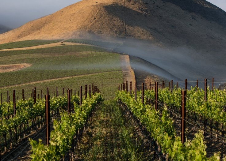 Santa Ynez California winery