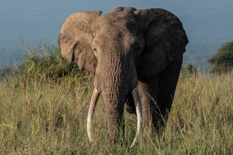 Elephant kills teenager in Congo