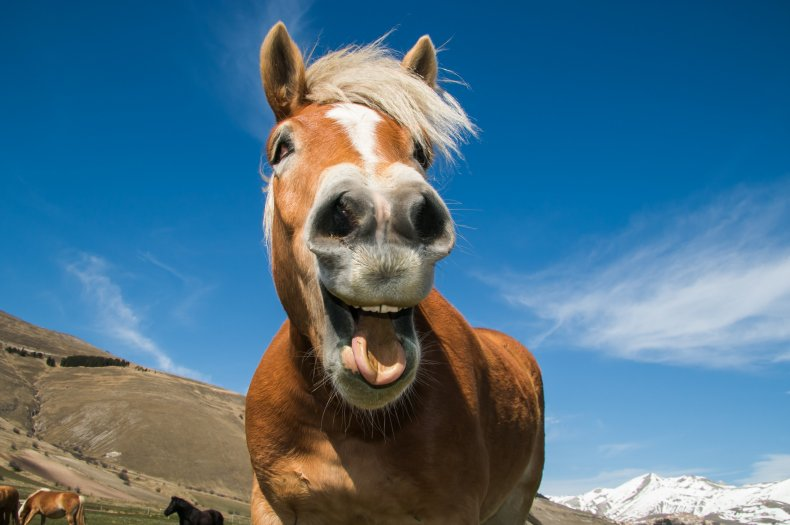 Horse pulling a funny face