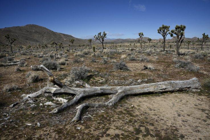 Decomposing Joshua tree