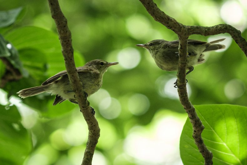 Two new birds discovered in Tanzania