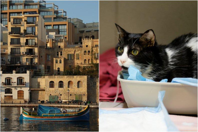 Cat thrown in Malta sea