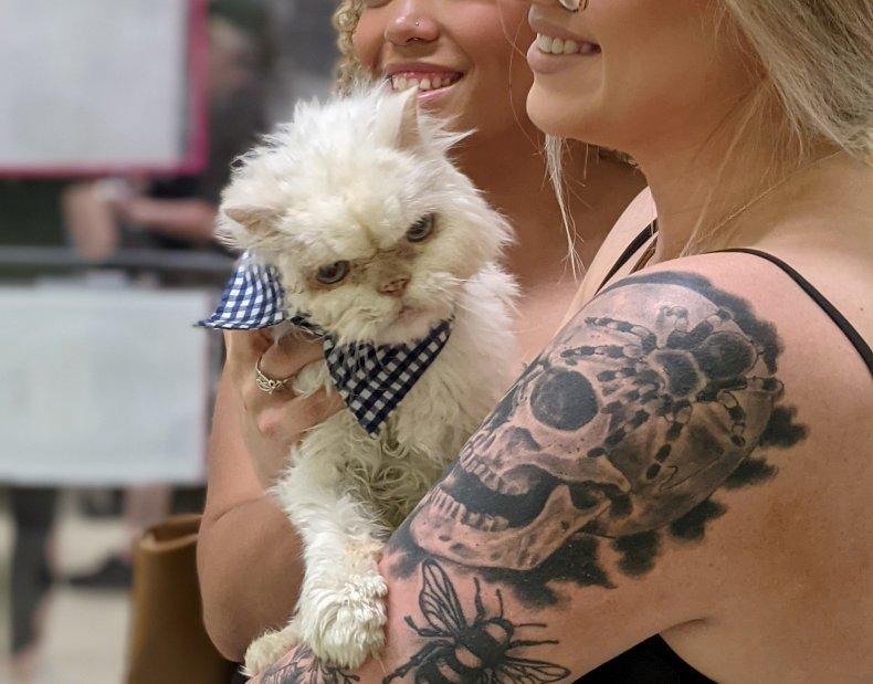 Sammy adoption