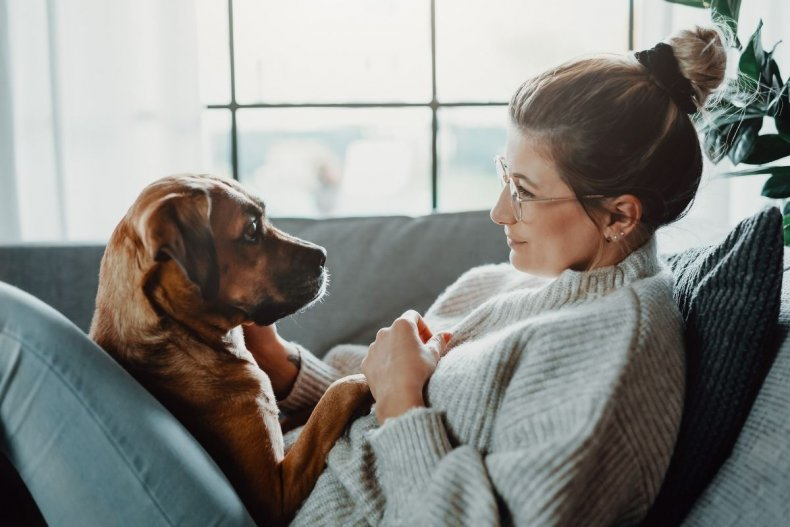 A dog with its owner at home