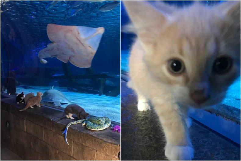 Adorable kittens up for adoption visit aquarium