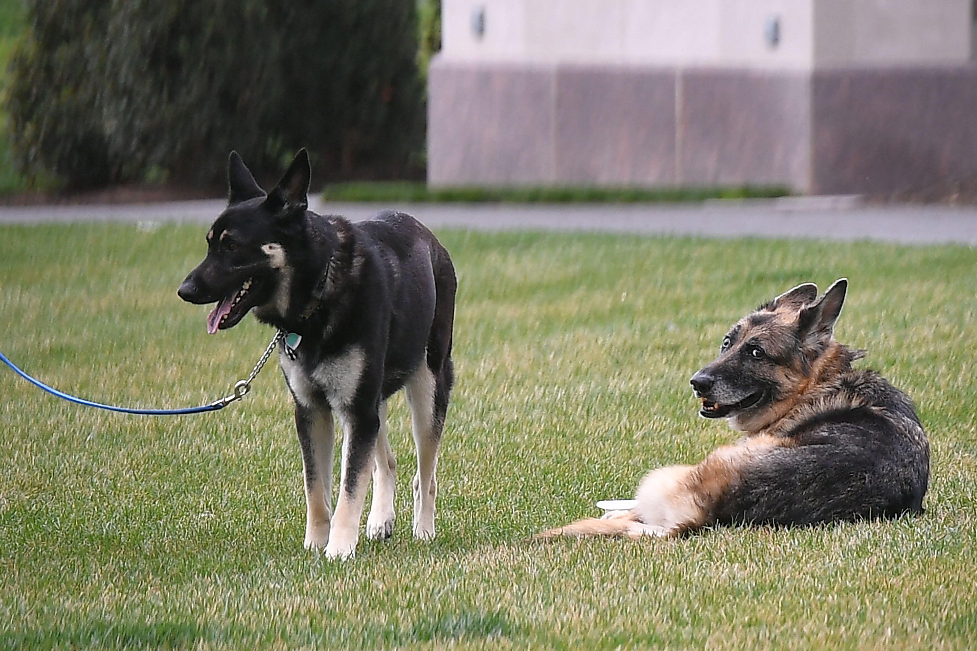 QAnon Believers Suggest Secret Message Behind Announcement of Biden Dog Champ's Death - Newsweek