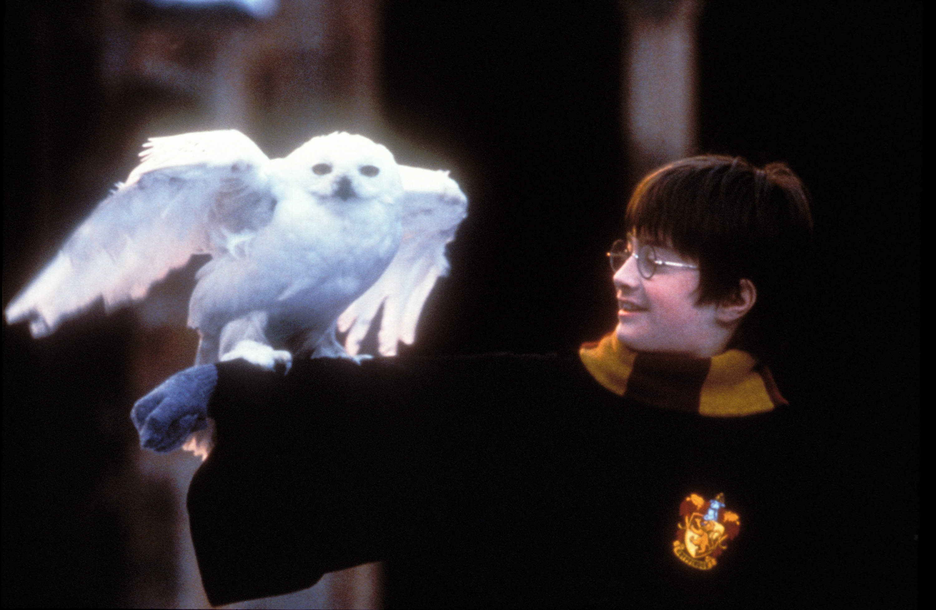 Harry Potter Nearly Killed Hedwig and People Are Only Just Realizing