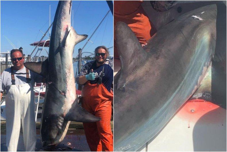 'Endangered' shark caught in New York