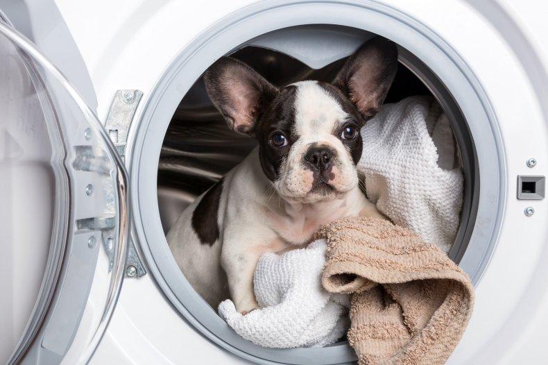 Dog in a washing machine