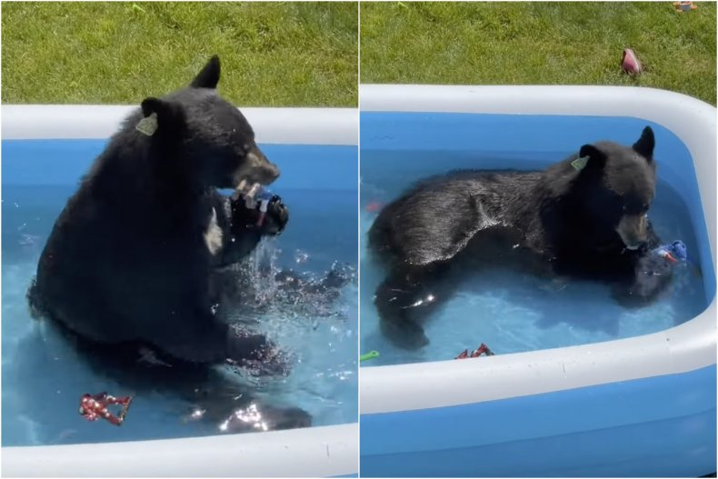 Bear plays with toys in kiddie pool