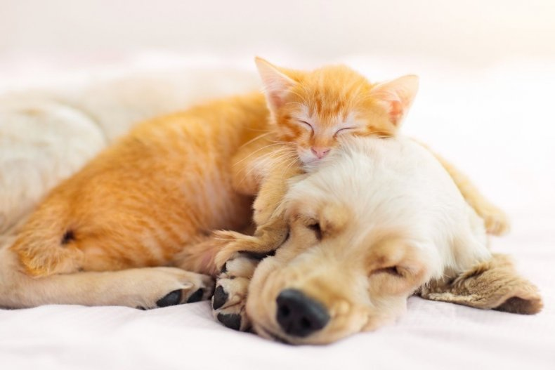 File photo of a dog and cat
