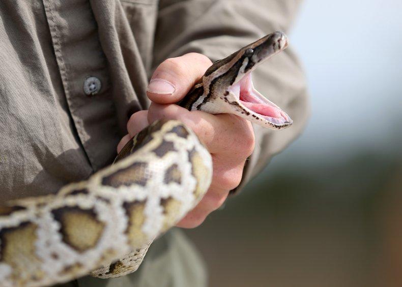 8-foot snake mistaken for 'garden hose'