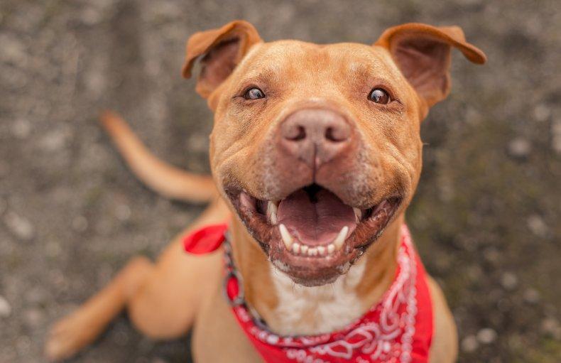 Aisha Nieves Kovu lost dog found adopted
