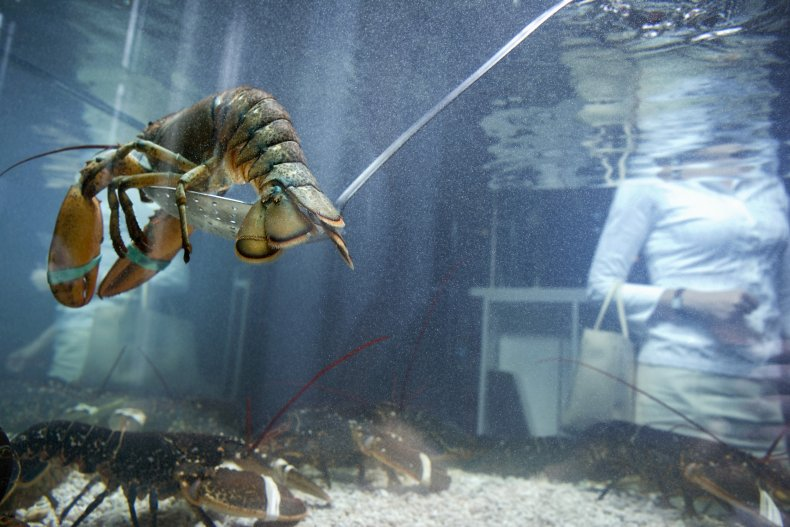Lobsters killed after oxygen supply turned off
