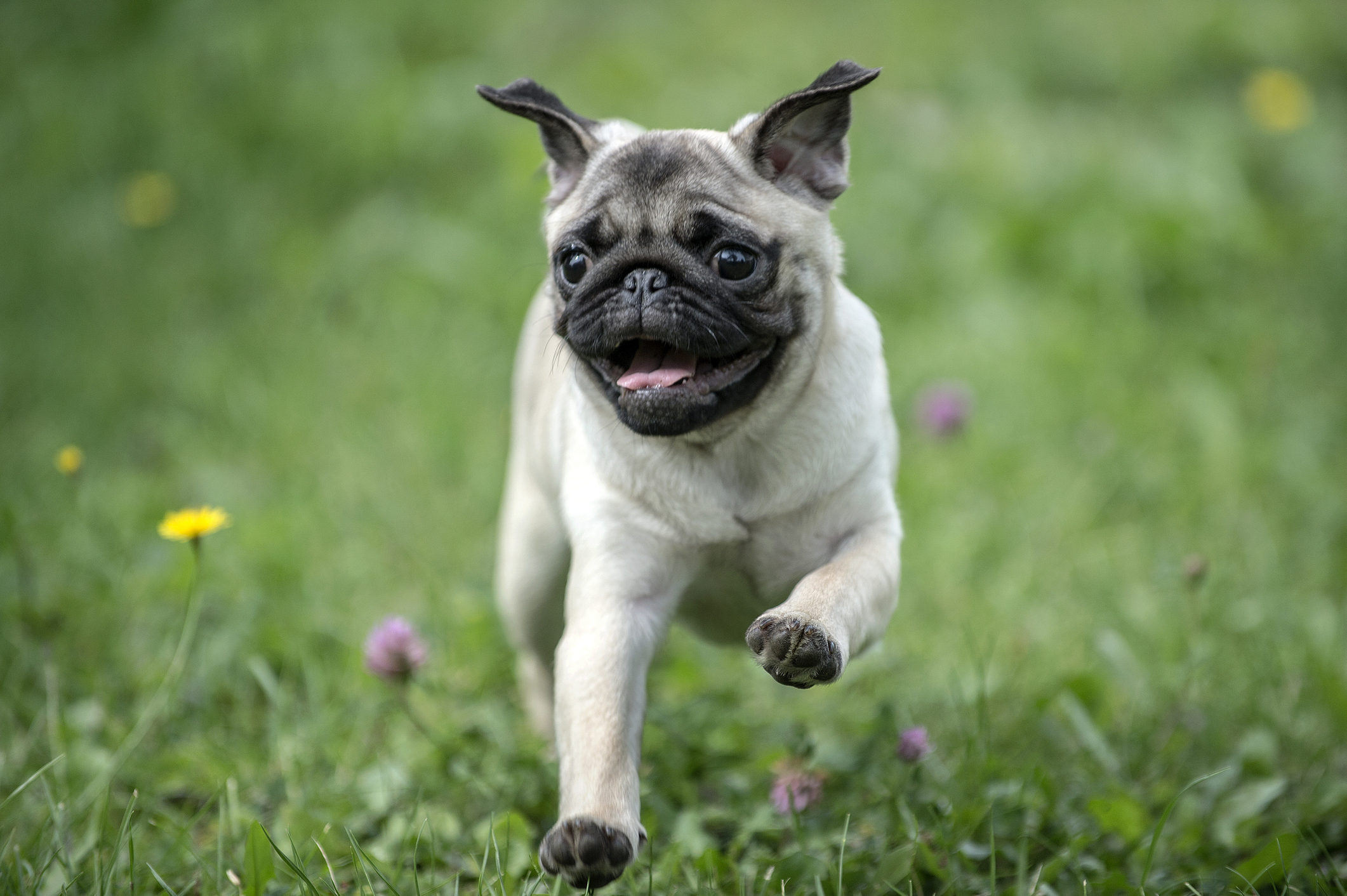 Neutering a Dog Rules and Costs