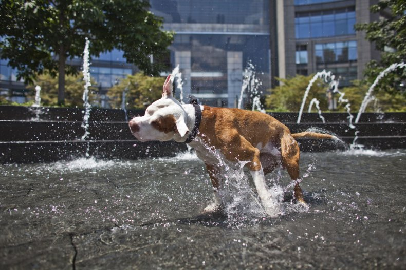 A dog cooling off in NYC.