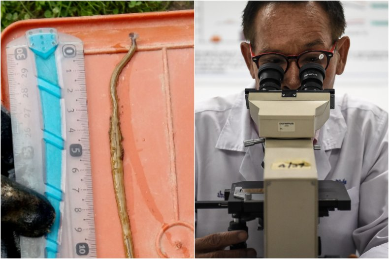 Toxic invasive hammerhead flatworm in Texas