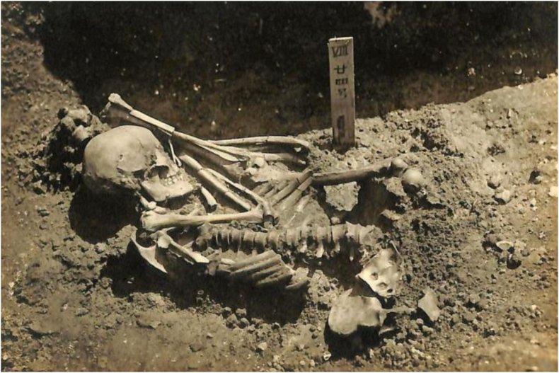 No24 Skeletal Remains
