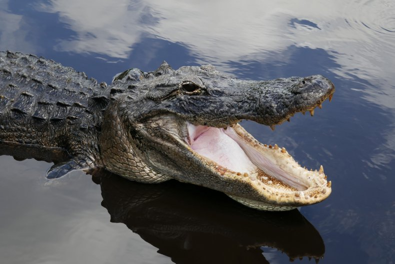 Alligator invited into church by pastor