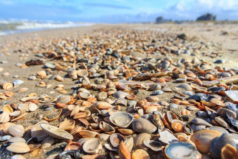 Marine Life Heat Wave Death Northwest Climate