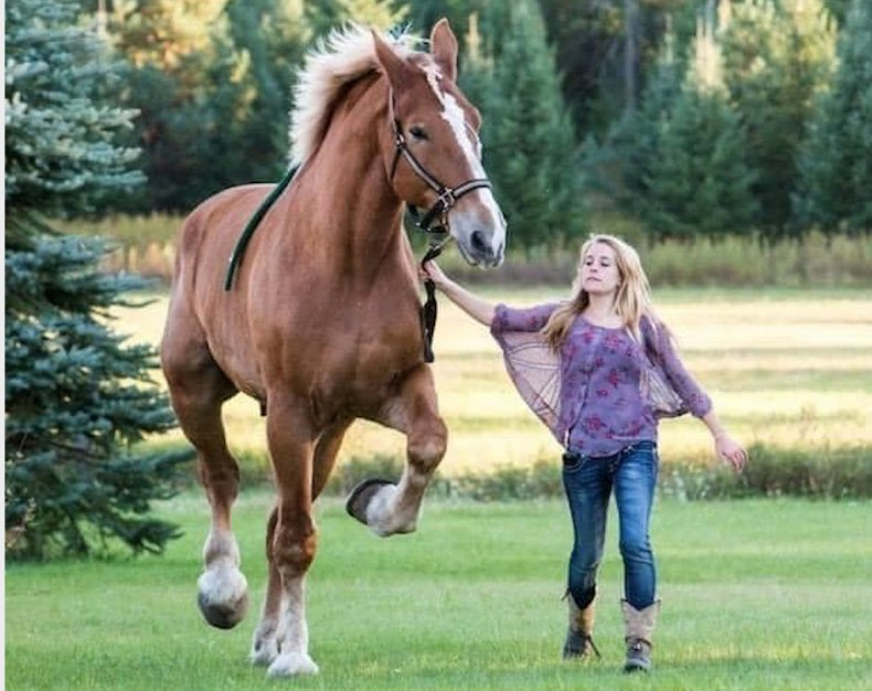 big jake horse world's tallest smokey hollowfarm