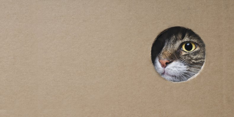 Cat spying through a hole