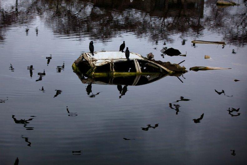 Birds sit on a semi-submerged car.
