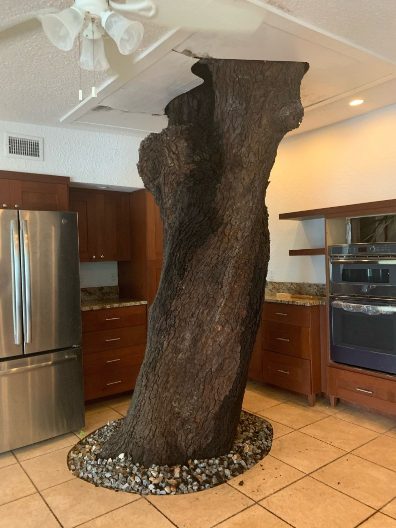 Photo of tree inside a Florida home.