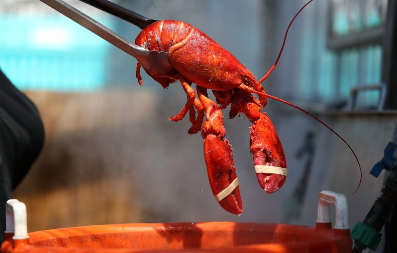 Lobster Removed from Pot