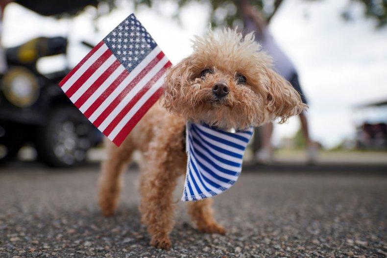 A small dog seen in South Carolina.