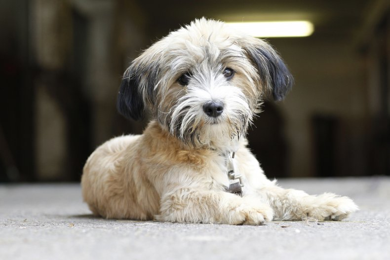 A dog at a Bavarian farm.
