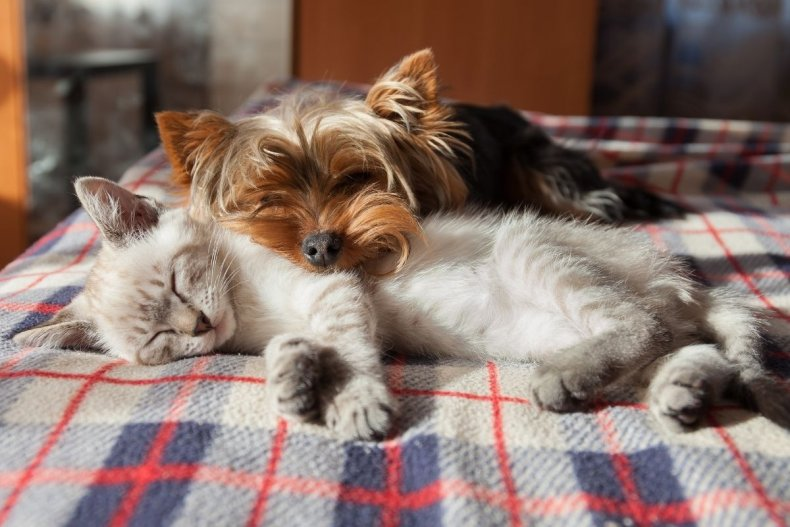 File photo of a cat and dog