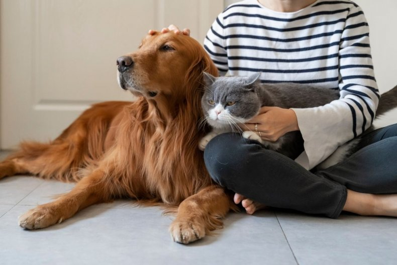 An owner with their cat and dog