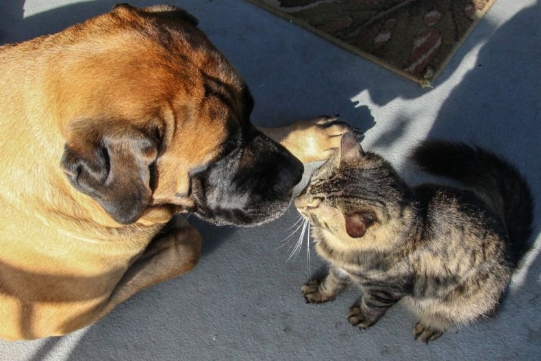 File photo of dog and cat meeting