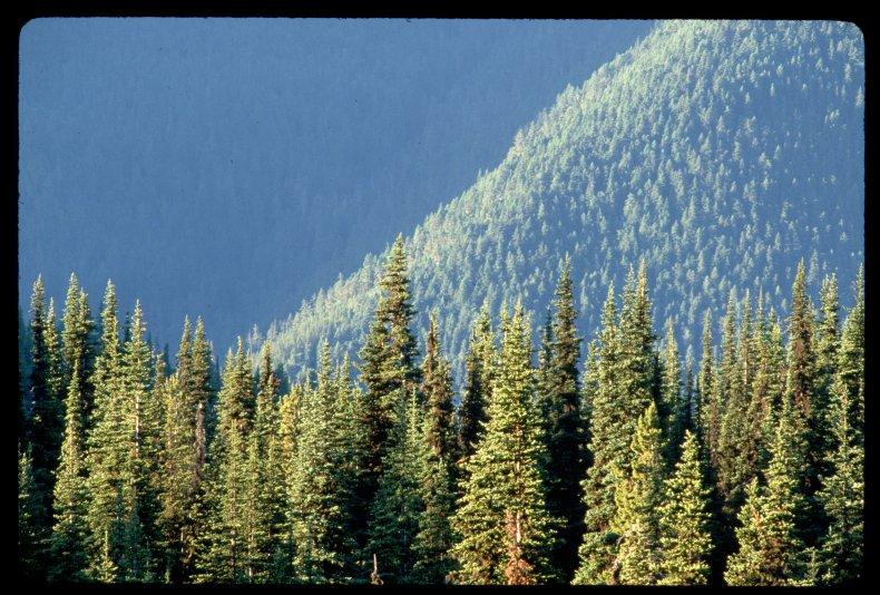 Nature in Washington State