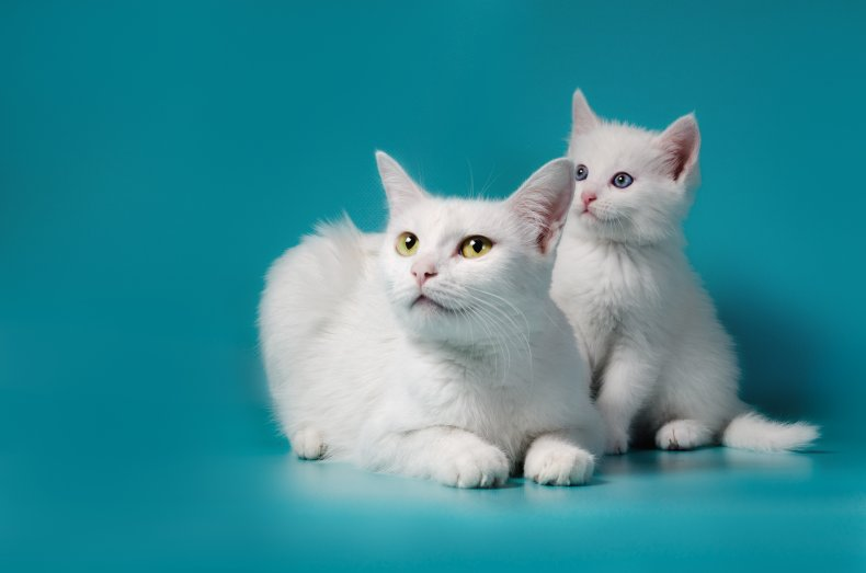Adult cat and kitten