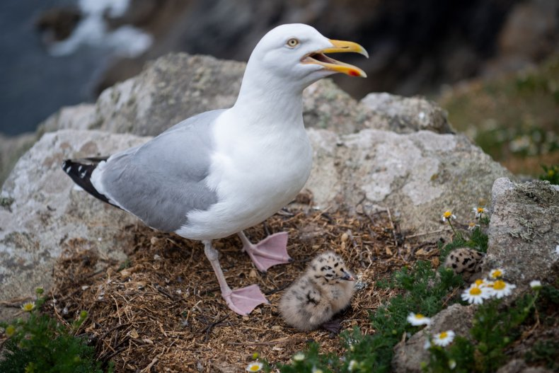 Seagull steals KFC from teen's mouth