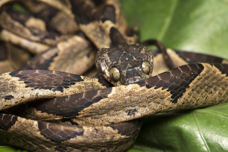 Snake found in banana box