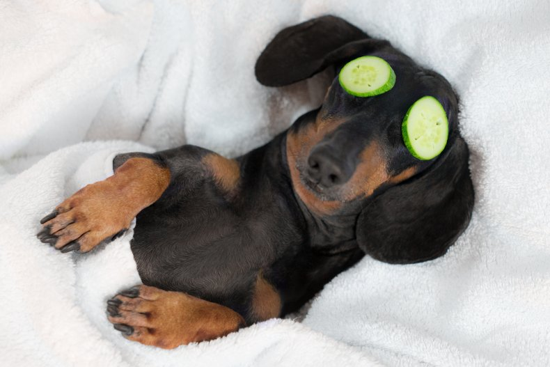A dog relaxing with cucumbers on eyes