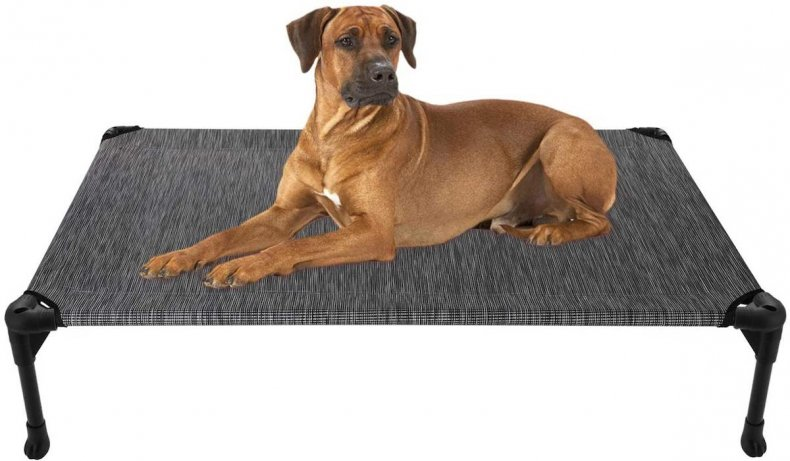 best pet products cooling cot