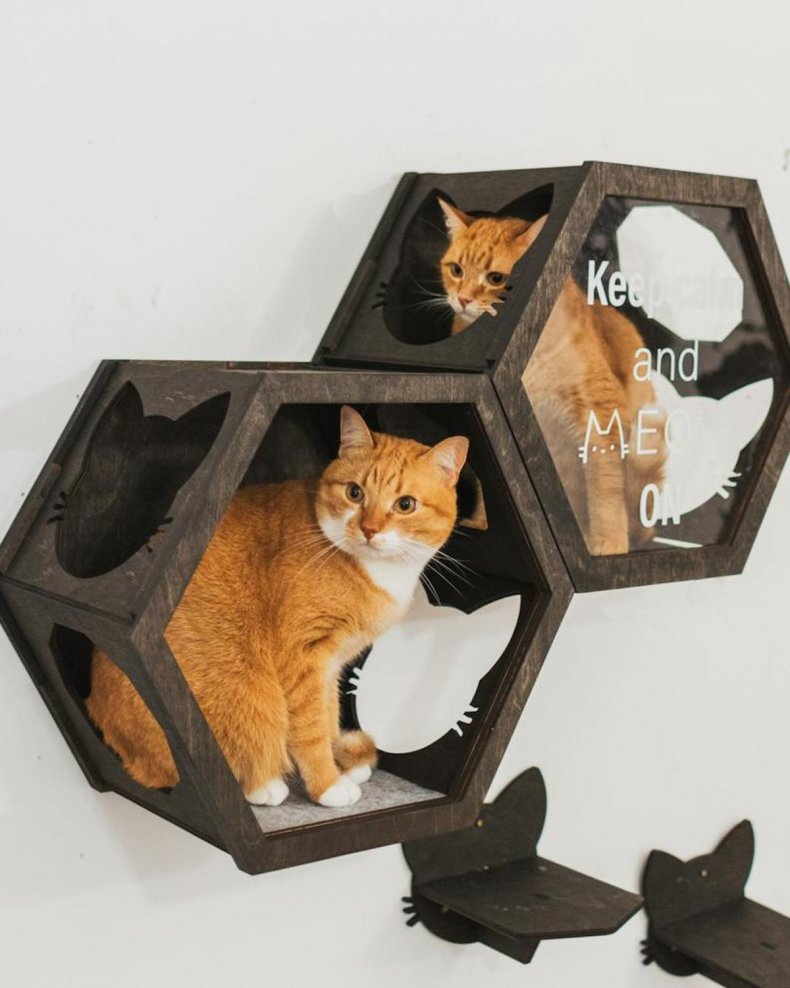 best pet products cat hexagon