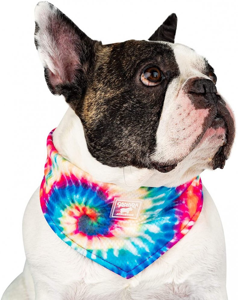 best pet products cooling bandana