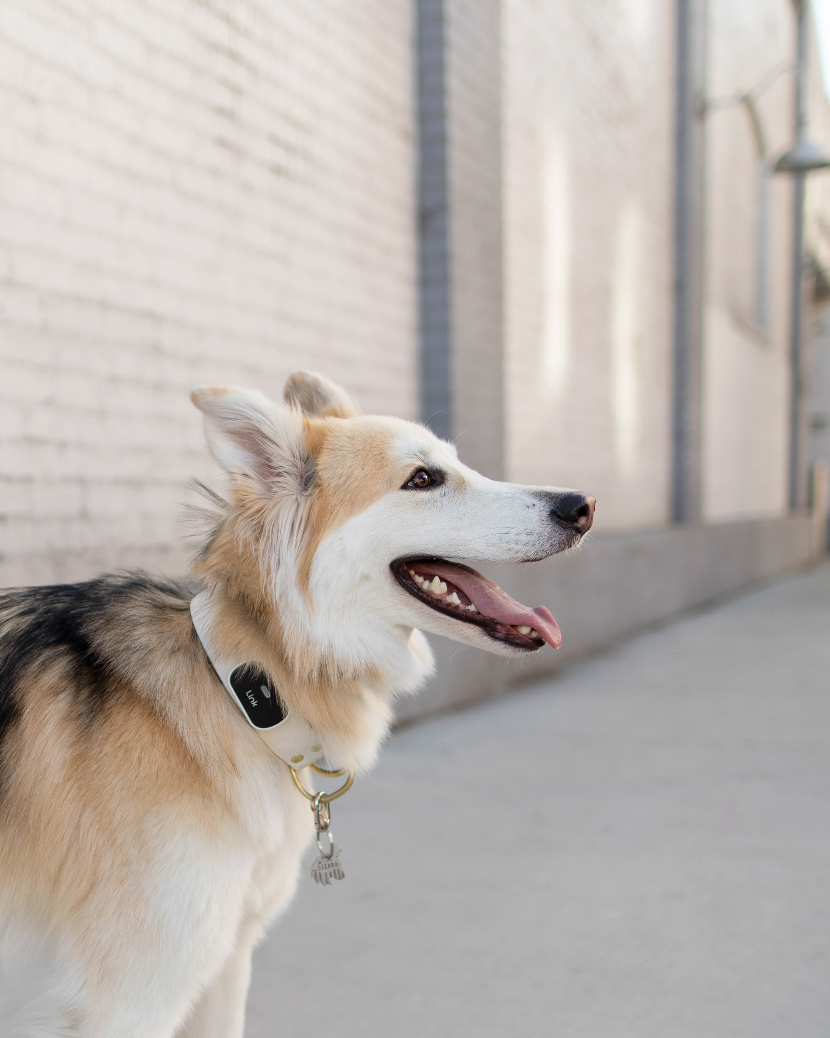 best pet products link 2